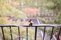Fuji 23mm f/1.4 X